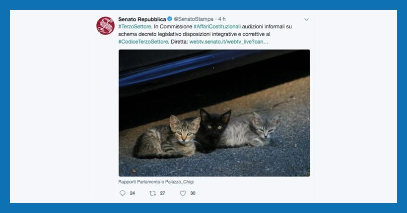 gattini-terzo-settore-senato